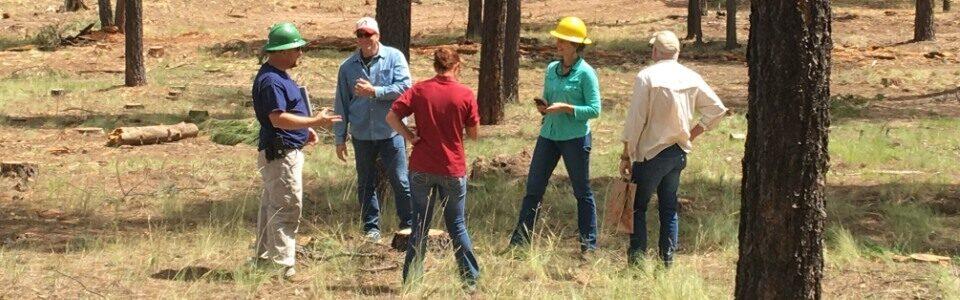 Восстановление леса услуги